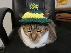 Cat Hat Kitty cat hat in Green Bay Packers by Bluetulipgifts, $4.50