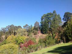 Golf Courses, Paradise, Plants, Plant, Heaven, Planting, Planets
