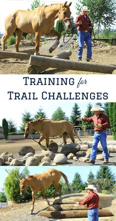 These groundwork exercises are good for any discipline or event, but especially if you're competing in mountain or extreme trail competitions, or AQHA Trail Challenges. Horses And Dogs, Show Horses, Extreme Trail, Paddock Trail, Horse Training Tips, Horse Tips, Horse Exercises, Discipline, Horse Ranch