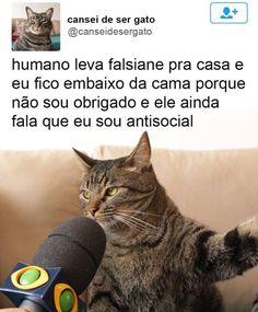 """Os 12 Melhores Memes """"Daquele Gato"""" ~ ZapZap da Zoeira"""