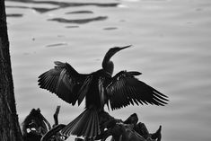 I made this photo a few years ago while walking around #LakeEolaPark early in the morning. . . . #nikonphotography #Orlando #Florida #nature #park #lake #bird #avian #blackandwhitephoto #photography #bnw_life #bw_society #bnwphotography #monochrome #black #white #morning #water #thecitybeautiful #blackwhite #bnw_captures #monochromatic #bnw_society#bw_crew