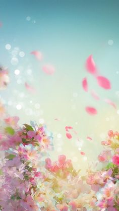 When wind makes flower reach high to the sky Flower Backgrounds, Photo Backgrounds, Flower Wallpaper, Wallpaper Backgrounds, Iphone Wallpaper, Beautiful Wallpaper, Animes Wallpapers, Cute Wallpapers, Flowers Nature