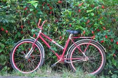 a vida é como andar de bicicleta... é precia sempre estar em movimento.Foto