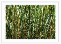11 - Bambú 2