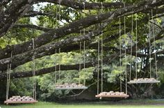 Bem casados nos balancinhos pendurados nos galhos da árvore. Amor puro !
