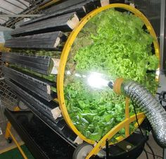 Lettuce on the hydroponic wheel! WOW!