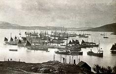 Barra: Castlebay. Herring fishing fleet