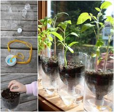 How To Make Self-watering Seed Starter Pots.. We are excited to share with you this recycling project. It is truly green and fun. You do not only recycle those plastic water bottles, but also make self-watering seed starter pots for you to start your herb or veggie garden earlier. When spring comes, your tomatoes are ready to be moved into the ground.