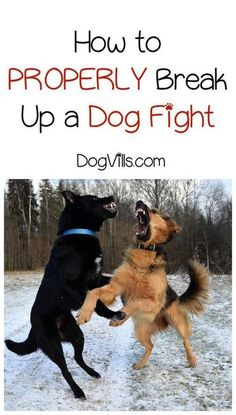 How do you break up a fight between two dogs? Check out these dog training tips to find out what to do and what not to do when Fido & Spot fight. how to train your dog Training Your Puppy, Dog Training Tips, Potty Training, Training Videos, Agility Training, Brain Training, Dog Training Treats, Training Schedule, Training Classes