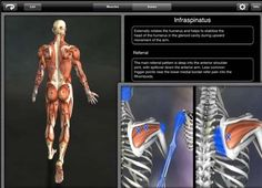 8shares 0 2 6 The iPad is truly an amazing and powerful device that can really be helpful when using specifically designed apps for physical therapy. Below are 7 iPad apps that I use everyday and find really useful in the clinical setting. These aren't designed just for physical therapy, and can be helpful for …