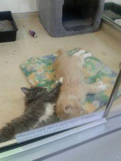 Kitty cats KAWAII