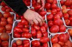 The lycopene in tomatoes discourages formation of blood vessels that feed tumours. (Windsor Star files)