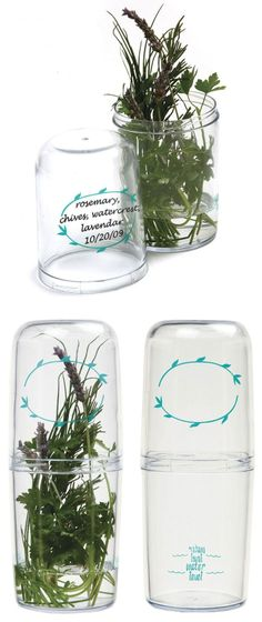 Fresh Herb Saver //  keeps herbs fresh for up to 3 weeks