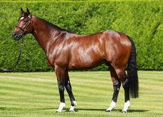 """FRANKEL 