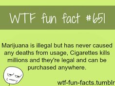 WTF Fun Facts is updated daily with interesting & funny random facts. We post about health, celebs/people, places, animals, history information and much more. New facts all day - every day! 8 Facts, Wtf Fun Facts, True Facts, Funny Facts, Random Facts, The More You Know, Did You Know, Mind Blowing Facts, Science Facts