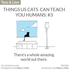 THINGS US CATS  CAN TEACH YOU HUMANS: #3 - There's a whole amazing world out there.