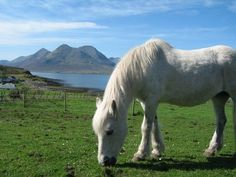 Pictures of Horses: Pictures of Beautiful White Horse