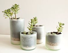 succulent planters made from wine bottles! i might just break down and buy them... so pretty!