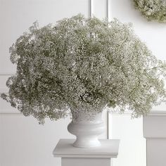Baby's breath - so heavenly!