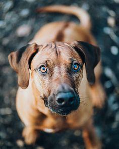 🦮🧡😄 . . . #topaustriaphoto #uppermoments #upperaustria #oberösterreich #ig_austria #weloveaustria #1000thingsinaustria #igersaustria #discoveraustria #visitaustria #loves_austria #dogstagram #hundeliebe #doglove #dogoftheday #dogphotography #dogsofinstagram #doglover #wanderlust #roamtheplanet #hundefotografie #artofvisuals #agameoftones #welivetoexplore #worldprime #hundeportrait #exklusive_shot #hundefoto #fatalframes #moodygrams @dogs_of_world @dogsofinstagram Wanderlust, Portrait, Austria, Labrador Retriever, Dogs, Animals, Instagram, Labrador Retrievers, Animales