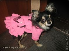 Своими руками Одежда для собак Мои работы мастер класс, поделка