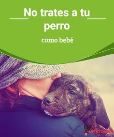 No trates a tu perro como bebé  Este hábito es frecuente en las parejas es perjudicial para la mascota. Si tratas a tu perro como bebé sería bueno que leas este artículo. #trato #mascota# #dueños #adiestramiento