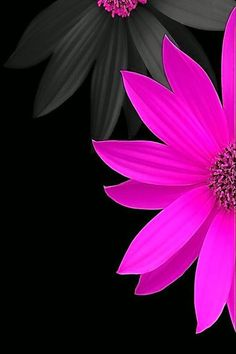 Flower Phone Wallpaper, Butterfly Wallpaper, Cellphone Wallpaper, Colorful Wallpaper, Beautiful Flowers Wallpapers, Beautiful Nature Wallpaper, Cute Wallpapers, Apple Wallpaper, Black Wallpaper