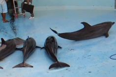 Heartbreaking Images of Dolphins in Drained Aquariums the Result of 'Routine' Practice, Says Ric O'Barry