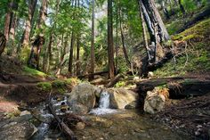 A small stream runs along the start of the Ewoldsen hiking trail at Julia Pfeiffer Burns State Park in Big Sur, Calif., on Tuesday, Feb. 10, 2015. (LiPo Ching/Bay Area News Group)