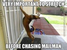 Stretching before chasing the mailman