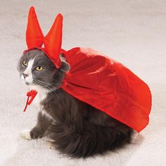 15 hilarious cats in costumes the Evil One Cat Costume
