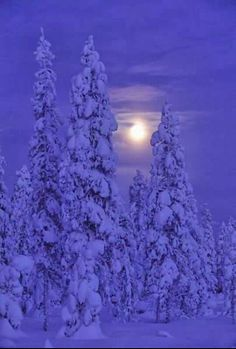 Moon shining through snow capped trees