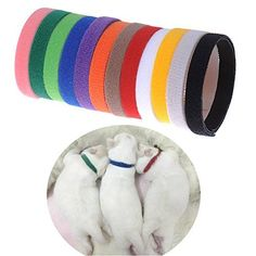 Set of 12 x Different Colors Sundlight Soft Whelping ID Velcro CollarsAdjustable  Reusable Bands for Newborn Puppies and Kitten >>> Check this awesome product by going to the link at the image.