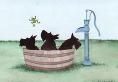 Scottish Terriers scotties get a bath in a by watercolorqueen