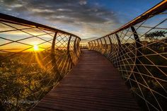 This surreal walkway recently installed in Cape Town, South Africa, creates a meandering, aerial path that allows visitors to stroll through the treetops. The steel-and-pinewood Kirstenbosch Centenary Tree Canopy Walkway begins on the forest floor, gradually sloping upward and eventually elevating guests to a spectacular vantage point above the canopy. From the heights, guests can …
