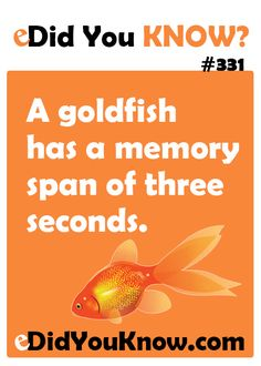 A goldfish has a memory span of three seconds. http://edidyouknow.com/did-you-know-331/