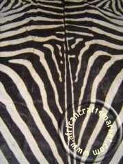 Zebra skin 3 close up