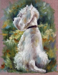 Westie Painting - Living Color by Mary Sparrow West Highland Terrier, Yorky, Animal Sketches, Dog Portraits, Westies, Art Pages, Animal Paintings, Beautiful Paintings, Animals