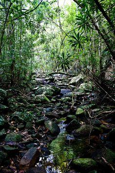 Redang Island - Jungle   Flickr - Photo Sharing!