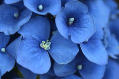 Blog post. Hydrangea photo by Calm Cradle.