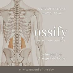 The #wordoftheday is ossify. #merriamwebster #dictionary #language