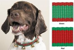 Jingle Bell Collars for Dogs | CoolPetStuff