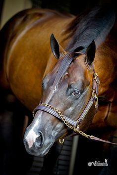 Rl Best Of Sudden. Quarter Horse.