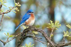 10 Favorite Trees for Wildlife