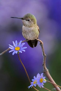 Things I Love About: Little Hummingbird