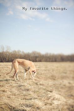 greyhound, tilt shift lens