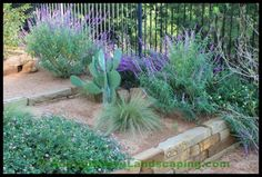 Landscape Design & Installation with a Focus on Native and Adapted Plants. Hardy and Drought Tolerant, Native Texas Plants thrive in our climate with minimum water, fertilizer, and maintenance …