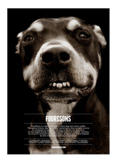 I like this poster because the image is large and forces you to focus on it without anything else taking it away. I also like the illusion that the dog is coming out from the background