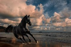 Freedom by Nick Cagouras on 500px