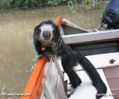 tour around the peruvian jungle, mokey island in Iquitos Peru